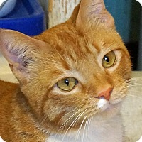 Adopt A Pet :: Buttercup - Sprakers, NY