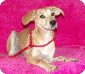 Labrador Retriever Mix Dog for adoption in Phillips, Wisconsin - Riley
