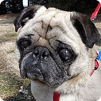 Adopt A Pet :: Ike - Madison, WI