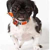 Adopt A Pet :: Cornwallace - New York, NY