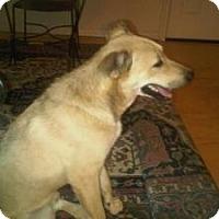 German Shepherd Dog/Rhodesian Ridgeback Mix Dog for adoption in Quinlan, Texas - Bingo