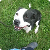 Adopt A Pet :: #273-14  ADOPTED! - Zanesville, OH