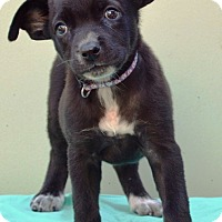 Adopt A Pet :: Simone - Pleasant Plain, OH