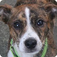 Adopt A Pet :: Rudy - North Olmsted, OH