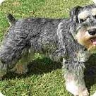 Adopt A Pet :: Paco