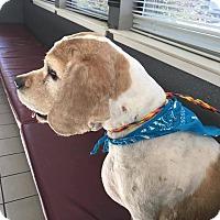 Adopt A Pet :: Murphy - Eugene, OR