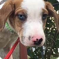 Adopt A Pet :: Frankie - Marlton, NJ