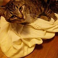 Adopt A Pet :: Adella - Jefferson, NC
