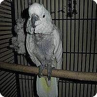 Adopt A Pet :: Ray Ray - Neenah, WI