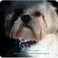 Adopt A Pet :: Gizmo - Arlington, TX