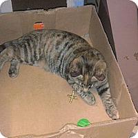 Adopt A Pet :: Sparkles (aka Sparky) - Acworth, GA
