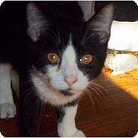 Adopt A Pet :: Oreo - feasterville, PA