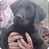 Adopt A Pet :: Boss - Somers, CT