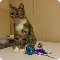 Adopt A Pet :: Piper Too - McDonough, GA