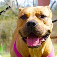 Adopt A Pet :: Jasmine - Daleville, AL