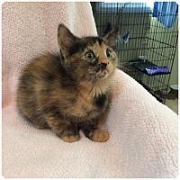 Adopt A Pet :: DUSKIE aka Daisy - Hamilton, NJ