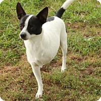 Adopt A Pet :: Gnash - Salem, NH