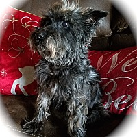 Adopt A Pet :: Sekura - Sharonville, OH