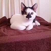 Adopt A Pet :: Donny - Tampa, FL