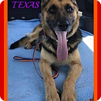 Adopt A Pet :: KYNA - Sebec, ME