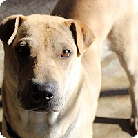 Adopt A Pet :: Sandy - Pompton Lakes, NJ