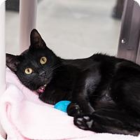 Adopt A Pet :: India - Houston, TX