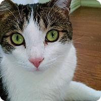 Adopt A Pet :: Momo - Los Angeles, CA