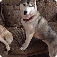 Adopt A Pet :: Maya - Brick, NJ