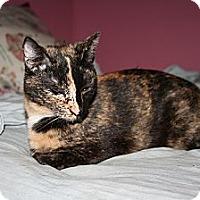 Adopt A Pet :: Meredith - Santa Rosa, CA