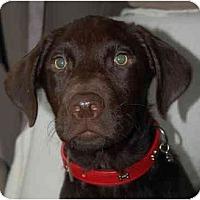 Adopt A Pet :: Clovis - Houston, TX