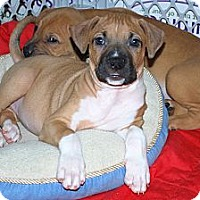 Adopt A Pet :: Allie - Minneola, FL