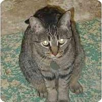 Adopt A Pet :: Cricket - Fort Lauderdale, FL