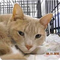 Adopt A Pet :: Shannon - Riverside, RI