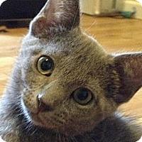 Adopt A Pet :: Kyler - Monroe, GA