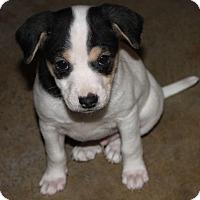 Adopt A Pet :: Snoopy - La Habra Heights, CA