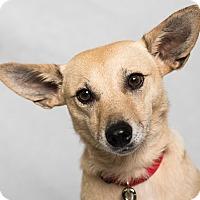 Adopt A Pet :: Lulu - Minneapolis, MN