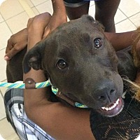 Adopt A Pet :: Madison - Fredericksburg, VA
