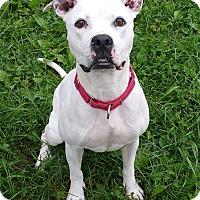 Adopt A Pet :: Princess- URGENT!! - Lisbon, OH