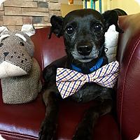 Adopt A Pet :: Max - Myakka City, FL