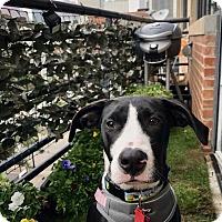 Adopt A Pet :: Sabrina - Allen, TX