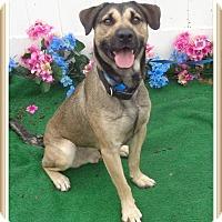 Adopt A Pet :: RIPLEY - Marietta, GA
