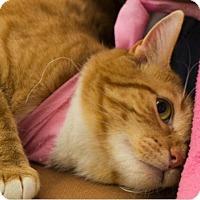 Adopt A Pet :: Adele - Marina del Rey, CA