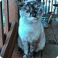 Adopt A Pet :: Cupcake - Morgan Hill, CA