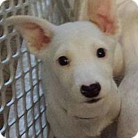 Adopt A Pet :: Hiccup - dragon litter - Phoenix, AZ
