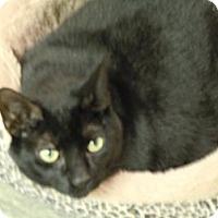 Adopt A Pet :: Poncho - Warminster, PA