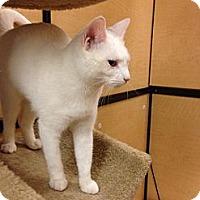 Adopt A Pet :: Crystal - Monroe, GA