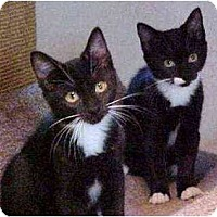 Adopt A Pet :: Isaac (with Pippa) - Portland, OR
