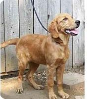 Adopt A Pet :: Jessie - Sun Valley, CA