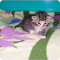 Adopt A Pet :: Savannah - Secaucus, NJ