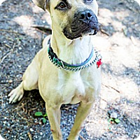 Adopt A Pet :: Penny - Tinton Falls, NJ